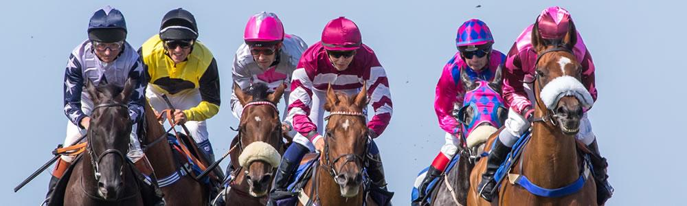 Horse Racing Jargon